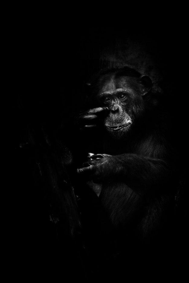 dunkle Seele