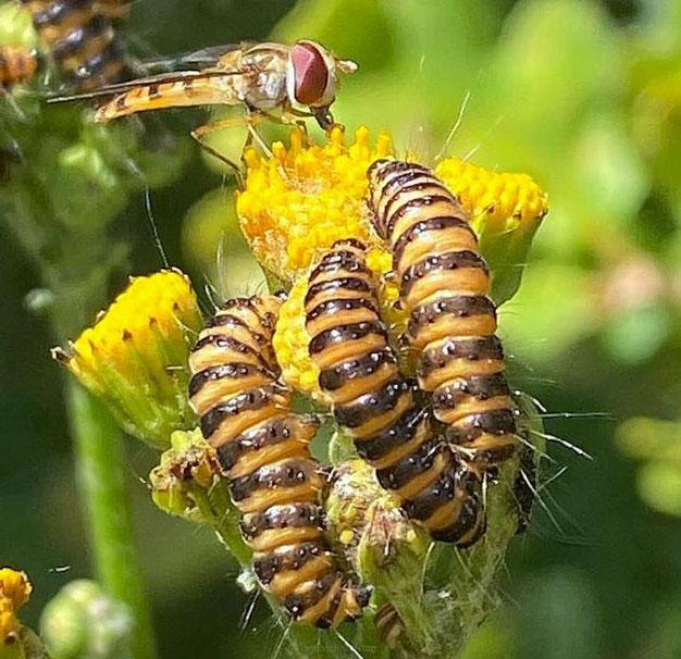 vlinders naar de tuin lokken
