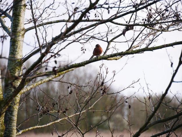 Natuurgebied Harderbos vogels spotten