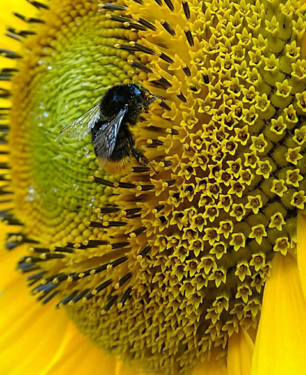 insect vriendelijke tuin- 20 planten tips