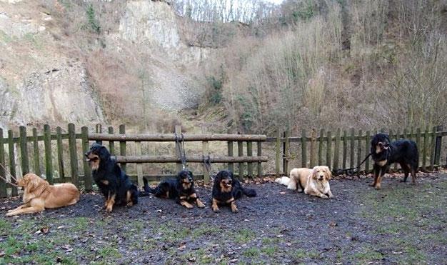 von links: Ares, Booker Hali Gali, Annabelle, Baki, Booker und Bastian vom Silberdistelwald