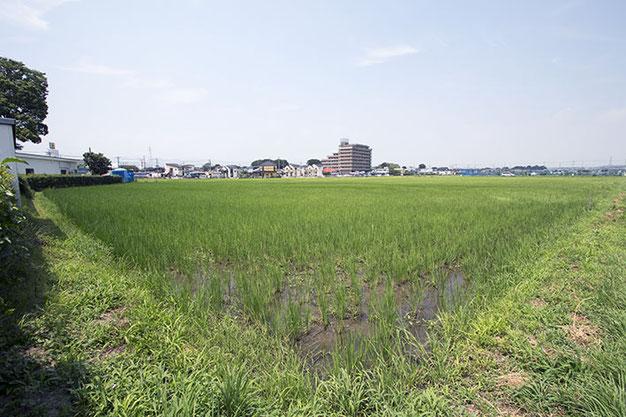 この日の最高気温は33.4℃。今年、海老名の7月平均気温は31日中、22日間で昨年を上回った。まだ稲の間に土が見える状況。