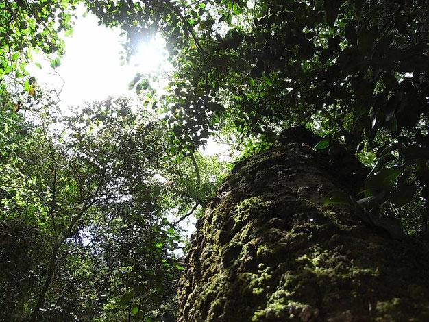 喜びの木 ホワイトペア 2015年4月