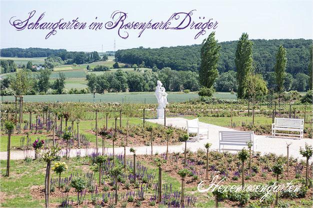 Rosen Hexenrosengarten Rosenpark Dräger Gönewein Bad Nauheim Steinfurth