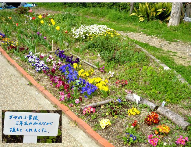 美しく植えられた花壇(萱野小3年生が・・)
