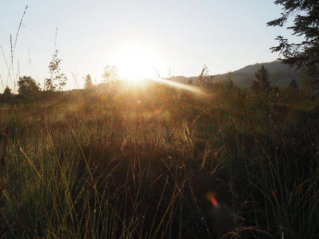 Sonnenaufgang Lichtkraft Seelen Zauber Tuggen