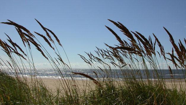 12/08/2004 14:31 - Mer Baltique près de Riga