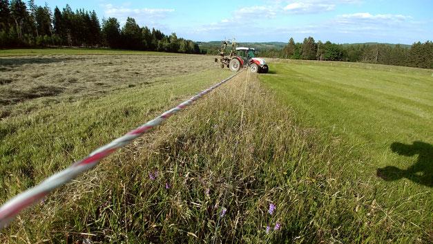 Dadurch das unter den Zäunen nicht gemäht werden kann entstehen überall natürliche Altgrasstreifen.