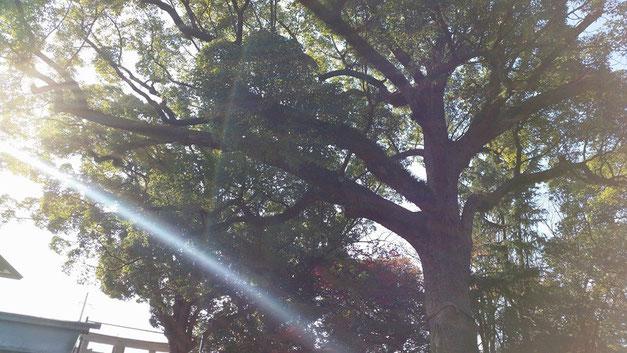 木のオーラ