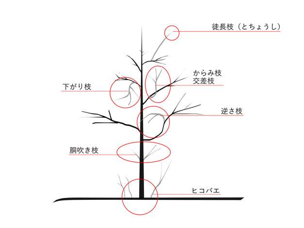 剪定すべき枝