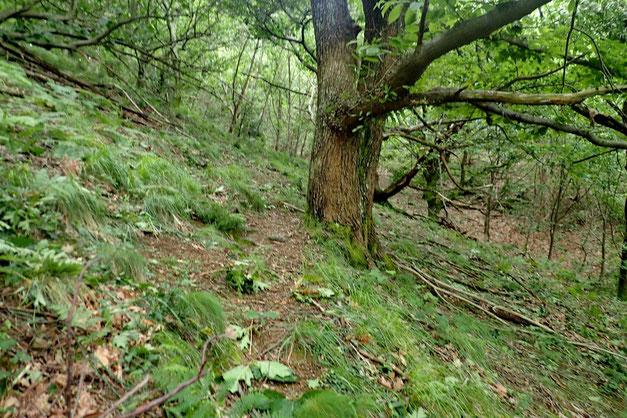 Puis un passage dans les bois tout aussi tonique...