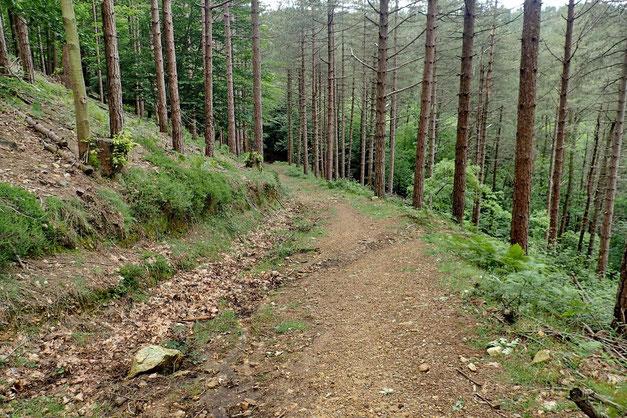 J'effectue la descente par un autre sentier.