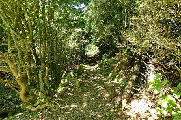 Puis descente à travers bois.