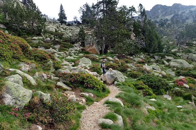 On attaque la montée vers le Gourg de Rabas. (Gourg = petit lac). Gourg de Rabas qui est l'objectif n° 1, on verra ensuite en fonction de la météo, et de la forme du néo-randonneur...