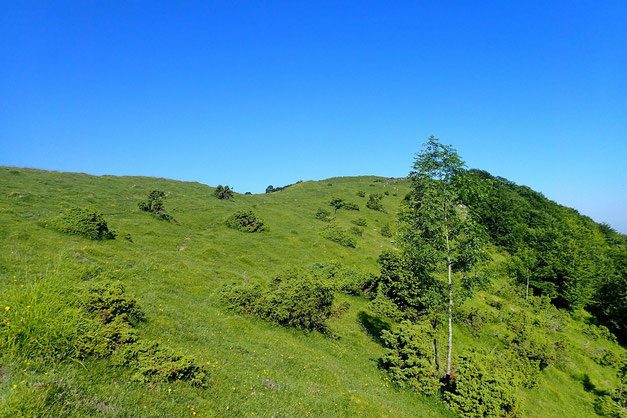 Après un passage en forêt, montée hors sentier vers le sommet.