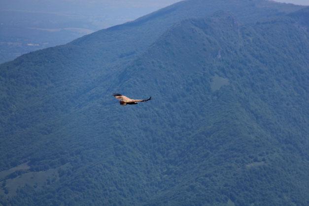 Dont un vautour.