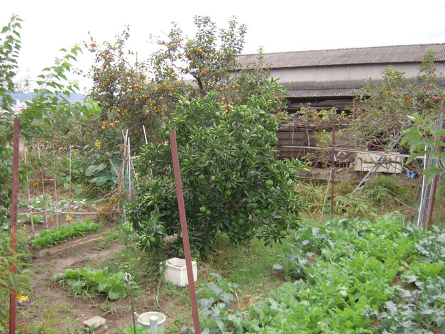 京都 城陽 秋のある畑 H25.10.22