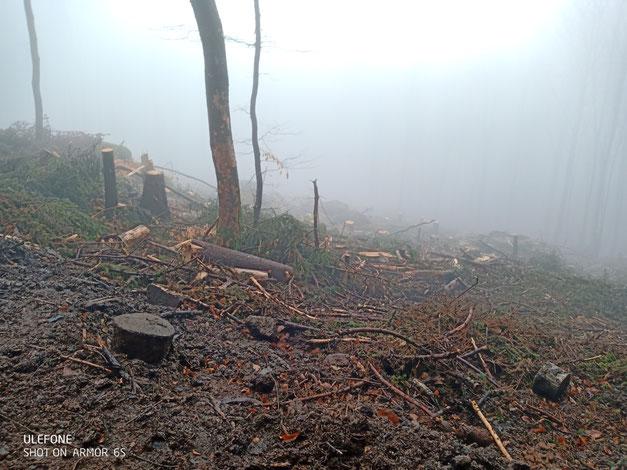 Kahlschläge auf auf der  Neunkirchner Höhe 605 m, 64397 Modautal, ein stark frequentiertes Naherholungsgebiet. Foto: K. Mühlenbock