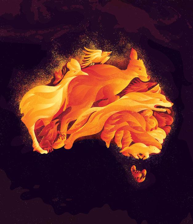 Bushfire, www.juliakerschbaumer.com