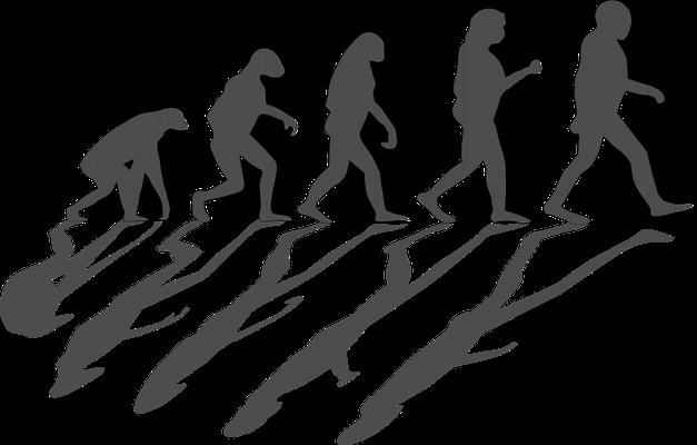 Darstellung der Evolutionstherrie