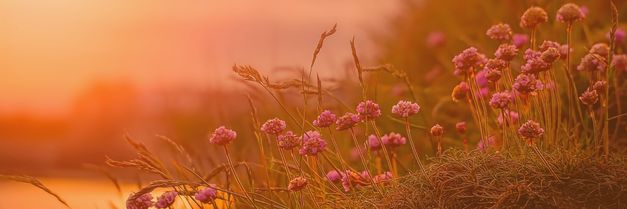 Blumen und Gräser - Ziel der Kinesiologie