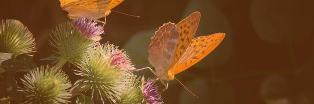 Disteln und Schmetterlinge - Wie ich abeite