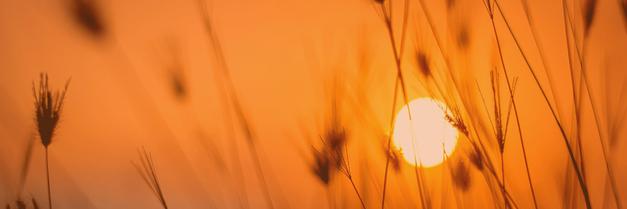 Gräser im Sonnenuntergang - Geschichte der Kinesiologie