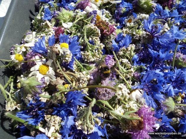 Hier bin ich Blüten am trocknen: Witwenblume, Flockenblume, Kamille, Schafgarbe, Margerite. Und wer ganz genau hinschaut, entdeckt eine Hummel, die sich noch ihr Futter sichert ;-)