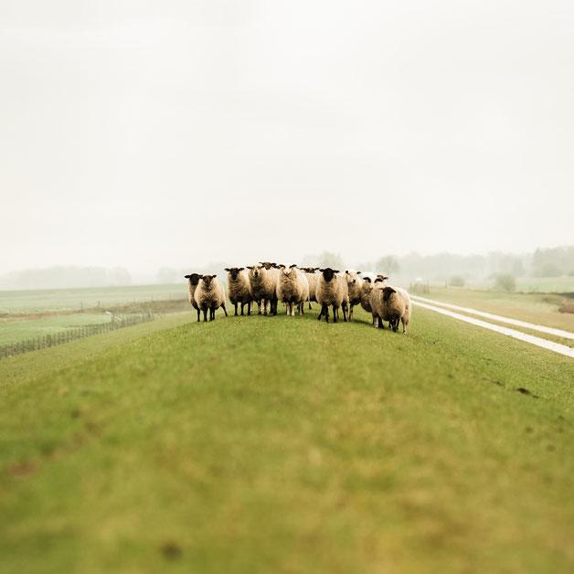 Unsere Mützen bzw. Beanies werden aus 100% Merino-Wolle in Deutschland produziert.