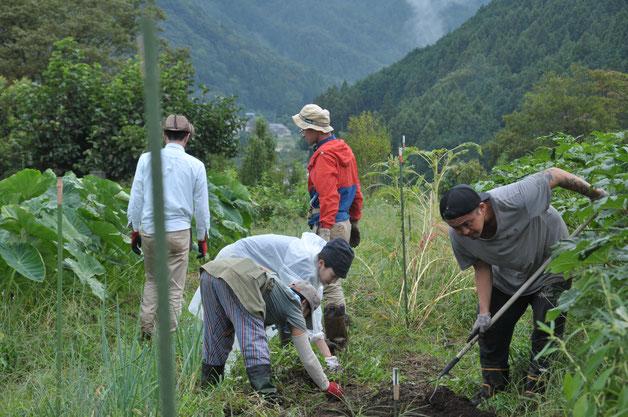 日本ホウレンソウ 固定種 自給菜園 自然栽培 野菜作り体験 体験農場