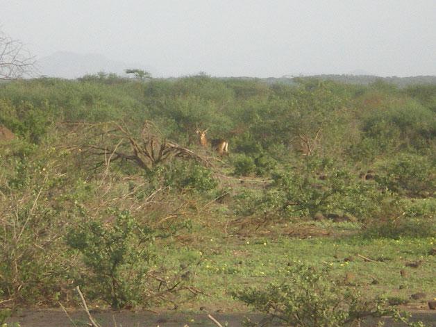 Côté droit du terrain, dos à la source avec des animaux familiers des lieux......