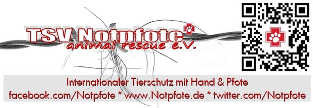 Tierschutzverein Notpfote Animal Rescue e.V.