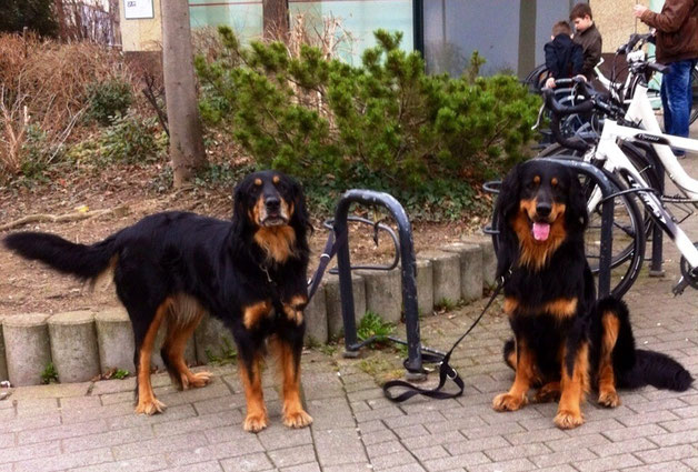 Annabelle ( links) und Baki allein in Euskirchen