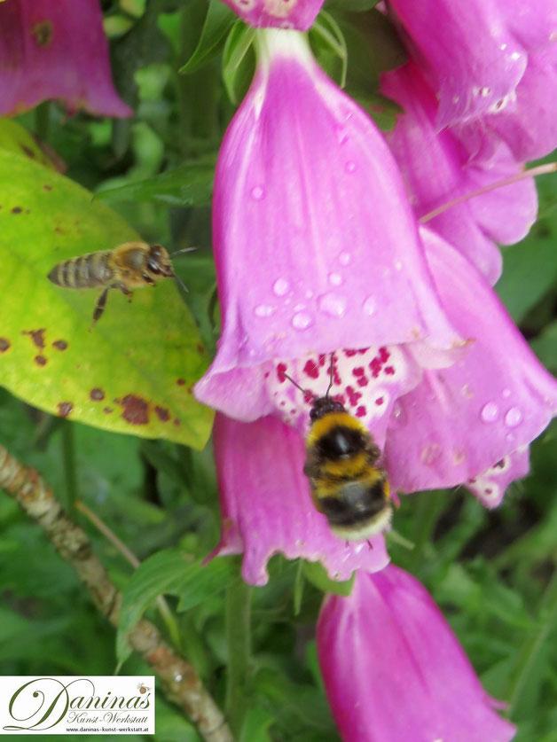 Hummeln und Honigbienen zählen zu den wichtigsten Bestäuberinsekten und müssen geschützt werden.