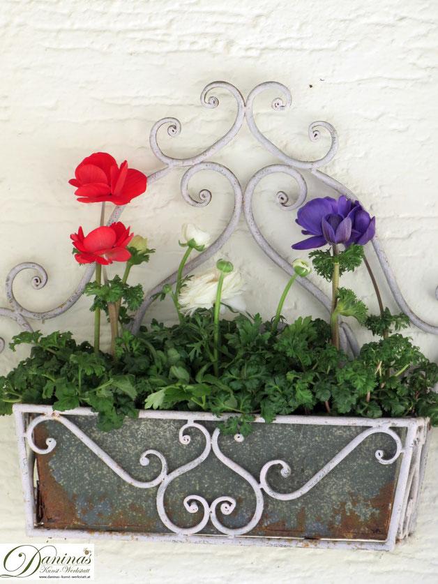 Bienenfreundliche Zwiebelblumen im Garten: Anemone im Frühjahr