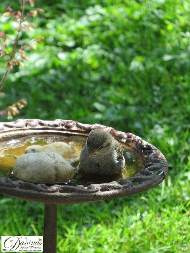 Durstiges Sperling Weibchen besucht die Vogeltränke