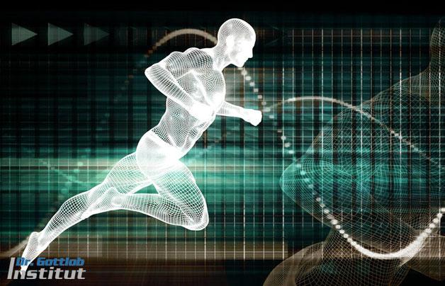 Differenziertes Athletiktraining Lehrgang Dr. Gottlob Institut für Personal Trainer, Fitnesstrainer, Physiotherapeuten, Leistungssportler usw.