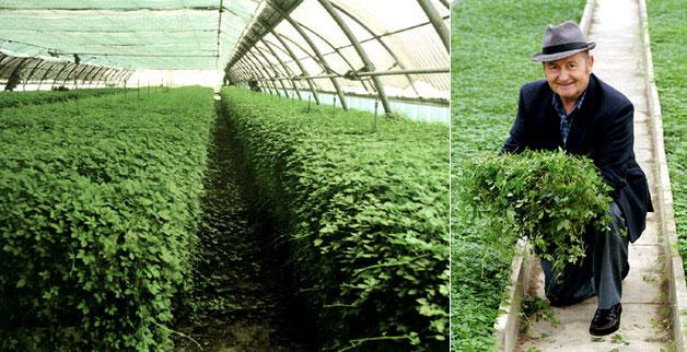 Il Signor Abrogio, con la pianta naturalizzata in Italia dopo 10 anni di studi e ricerche