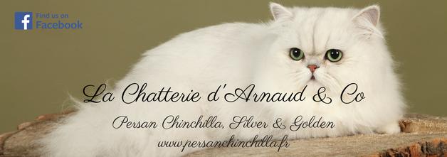 Bannière site internet www.persanchinchilla.fr