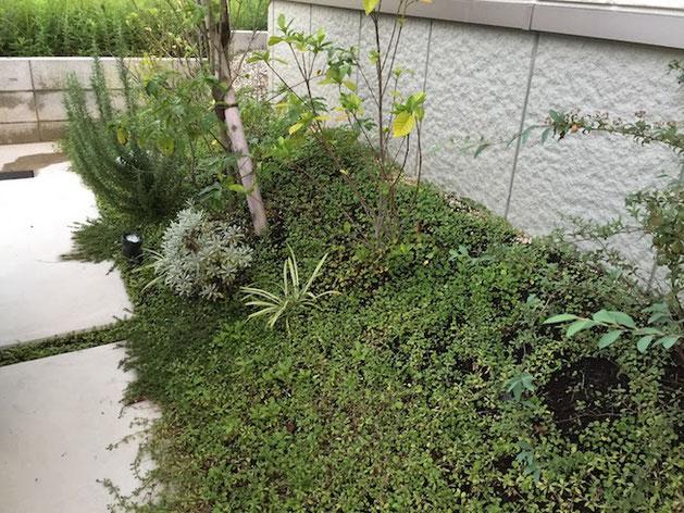 法面が奇麗に緑化されて土留めの役割をしている。