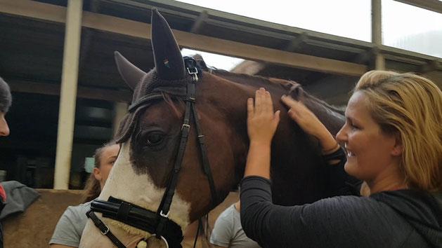 Pferd loben Team Neuss Voltigieren Pferdesport Akrobatik