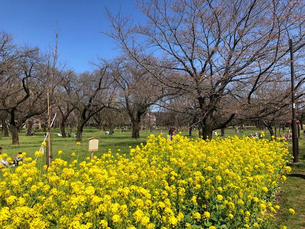 3月末の小金井公園