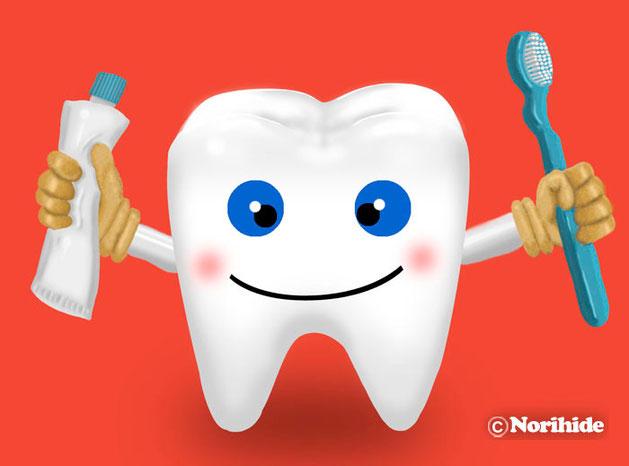 歯,Tooth