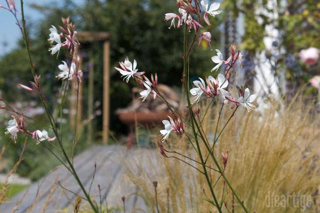 dieartigeBLOG - Prachtkerze (Gaura lindheimeri) und Federgras (Stipa tenuissima)