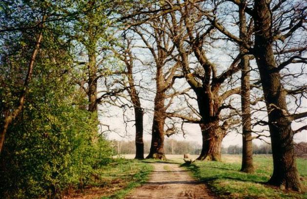 Der südliche Bogen des Heiligen Weges, 1994. (Photo: Marie Kieper)