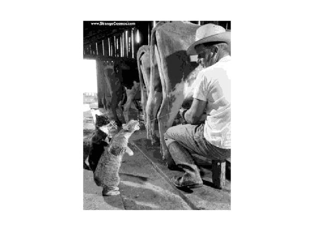 El vaquero invita a unos tragos.