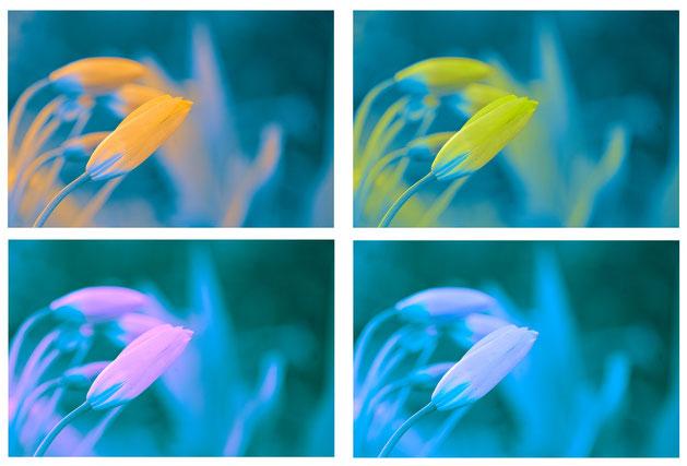 Tulpen, Art , Haus , Arthaus , Kempen , Düsseldorf , Krefeld , Köln , Bonn , Atelier , Galerie , Bild , Gemälde , Kunst , Acryl , Leinwand ,  Heimbucher , arthaus kempen , Kunst , Fotokunst , Künstler , Günter Heimbucher , Silvia Heimbucher