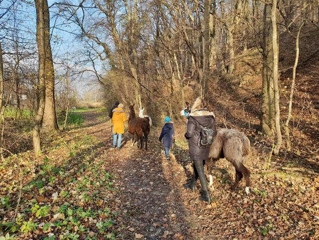 Lamawanderung, Wandern mit Lamas, Lamawanderung Niederösterreich, Lama Mama, Sommerein, Leithagebirge, Niederösterreich
