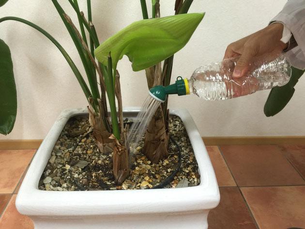 シャワーキャップを取り付けたペットボトル。ペットボトルを押して圧をかけると水がきれいに飛び出します。