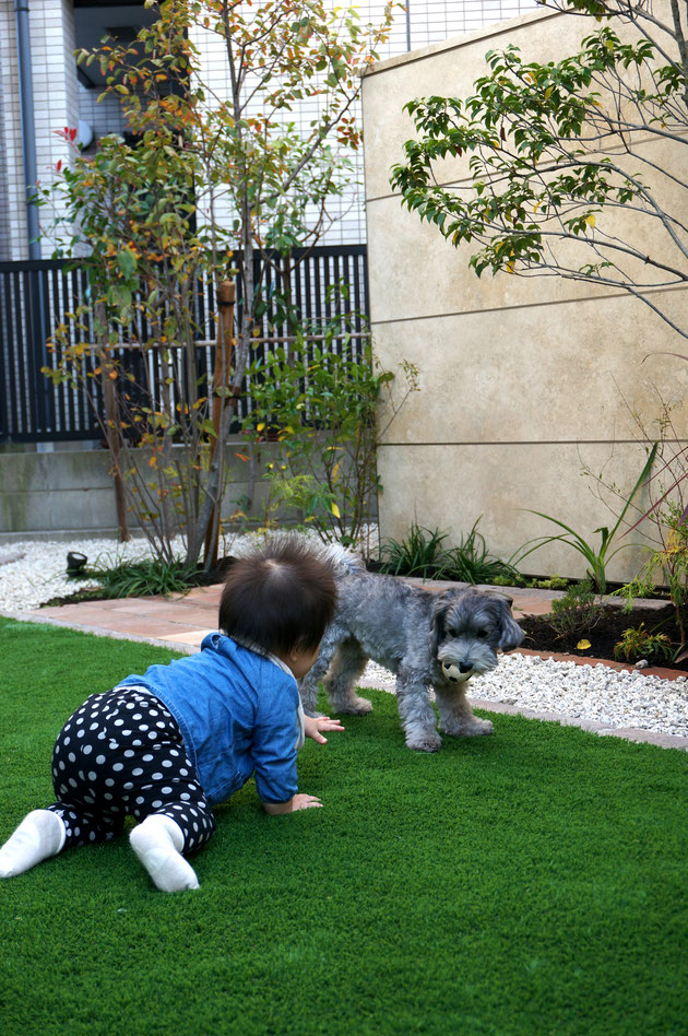 犬のマルちゃんと庭で遊ぶ珠ちゃん。何べん見ても良い写真だなあ。